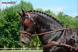 Książ 10 lipca 2016 - konie iludzie