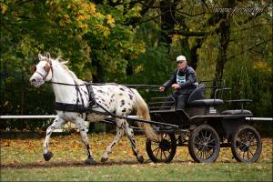 Książ 16-17 października - ogiery szlachetne